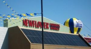 newflower1